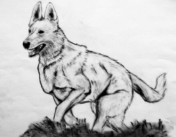 How To Draw A Dog Step By Step Draw Dog Easy Tutorial 2020