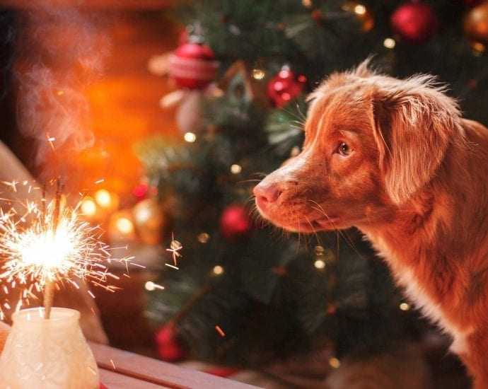 How to Help Dogs with Fireworks in New Years Eve 2020