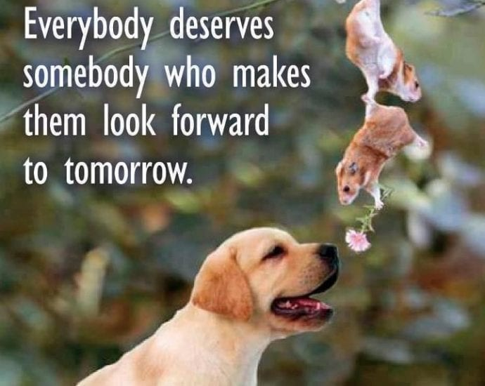 Everybody deserves somebody who makes them look forward to tomorrow petworldglobal.com
