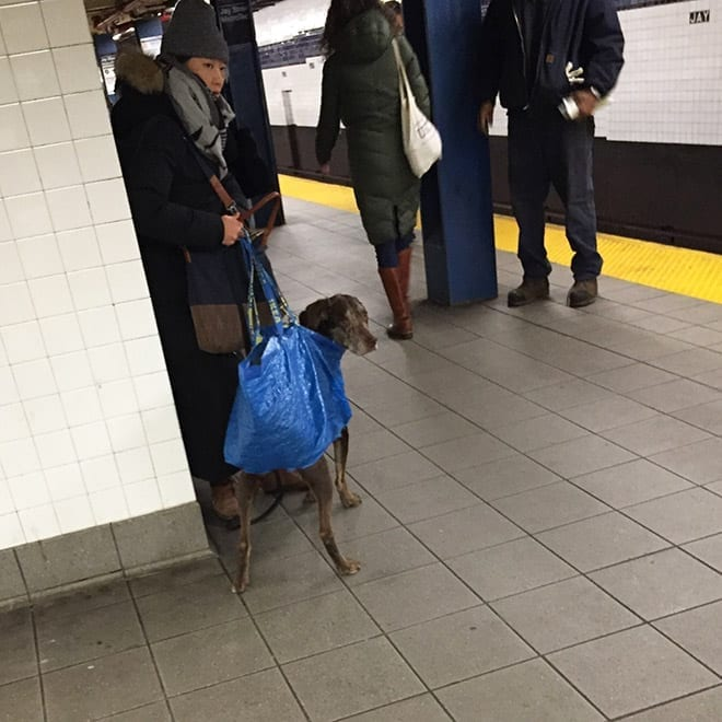 New York City Subway ban large dogs from the subway