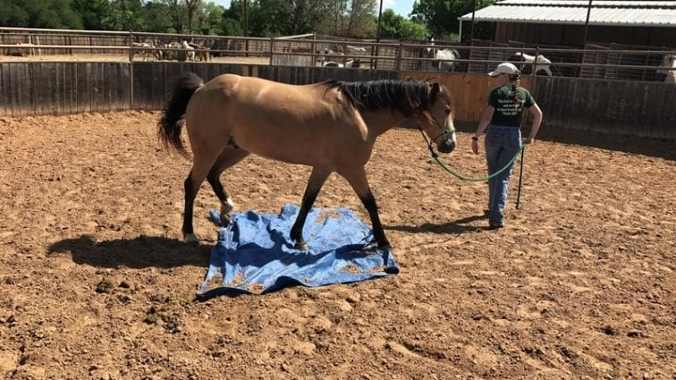 All Around Nice Buckskin Gelding 4 Sale petworldglobal.com