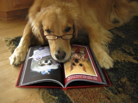 TOP 6 Bestselling Dog Books