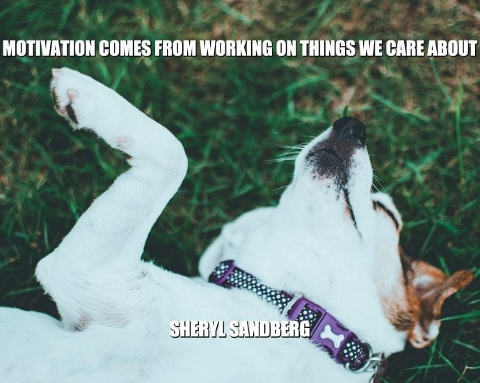 Daily Quotes: Motivation Comes From Working on Things We Care About petworldglobal.com