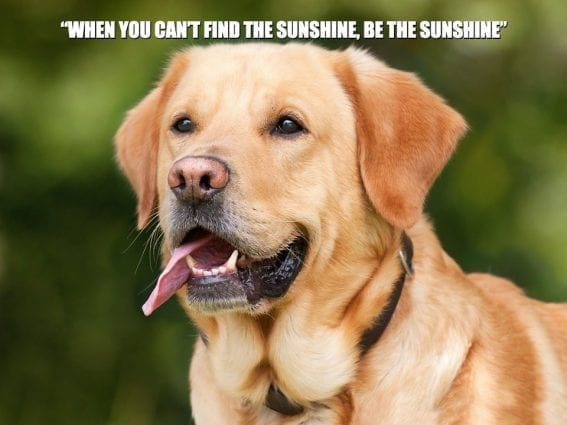 """Daily quotes: """"When you can't find the sunshine, be the sunshine"""" petworldglobal.com"""