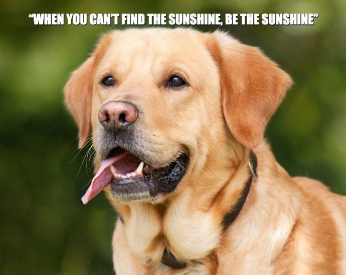 "Daily quotes: ""When you can't find the sunshine, be the sunshine"" petworldglobal.com"