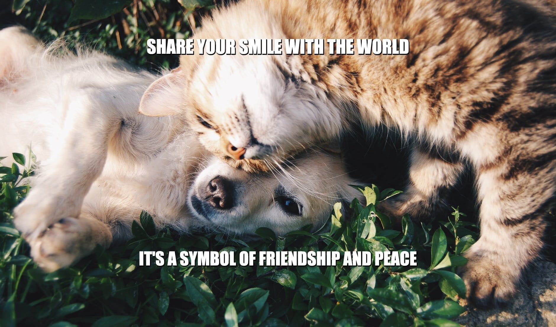 Daily Quotes: Share Your Smile With the World. It's a Symbol of Friendship and Peace petworldglobal.com