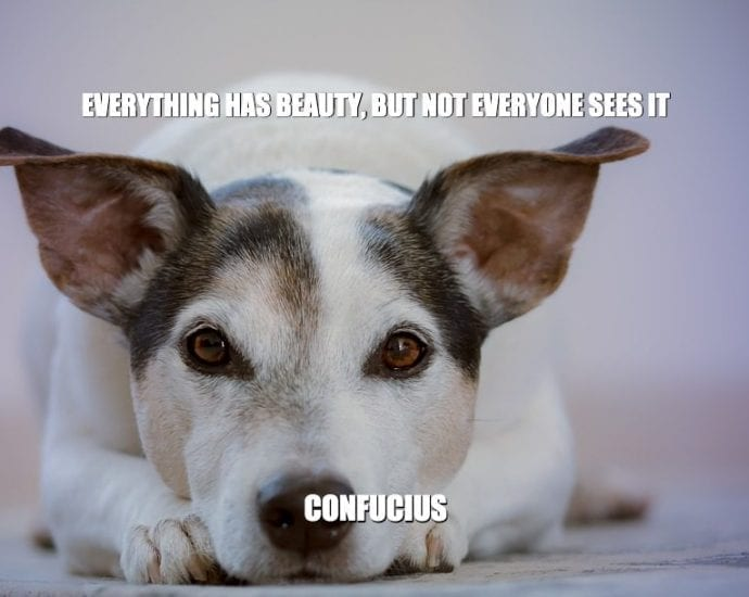 Daily Quotes: Everything Has Beauty, But Not Everyone Sees It petworldglobal.com