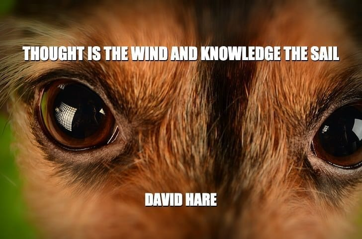 Daily Quotes: Thought Is The Wind And Knowledge The Sail petworldglobal.com