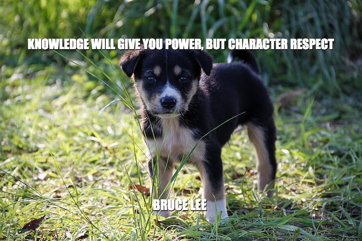 Daily Quotes: Knowledge Will Give You Power, But Character Respect petworldglobal.com