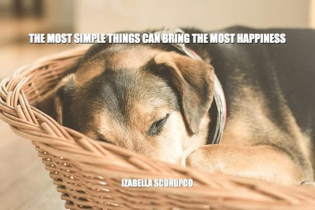 Daily Quotes: The Most Simple Things Can Bring The Most Happiness petworldglobal.com
