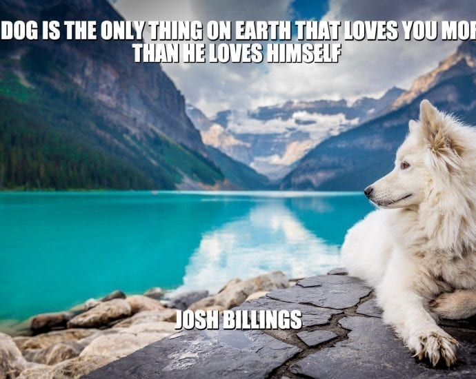 Daily Quotes: A Dog is The Only Thing on Earth That Loves You More Than He Loves Himself petworldglobal.com