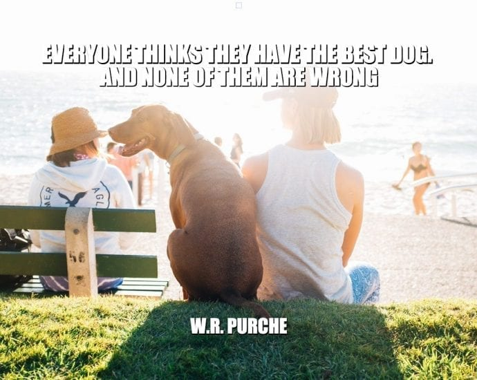 Daily Quotes: Everyone Thinks They Have The Best Dog. And None Of Them Are Wrong petworldglobal.com