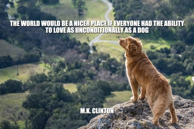 Daily Quotes: The World Would Be A Nicer Place If Everyone Had The Ability To Love As Unconditionally As A Dog petworldglobal.com
