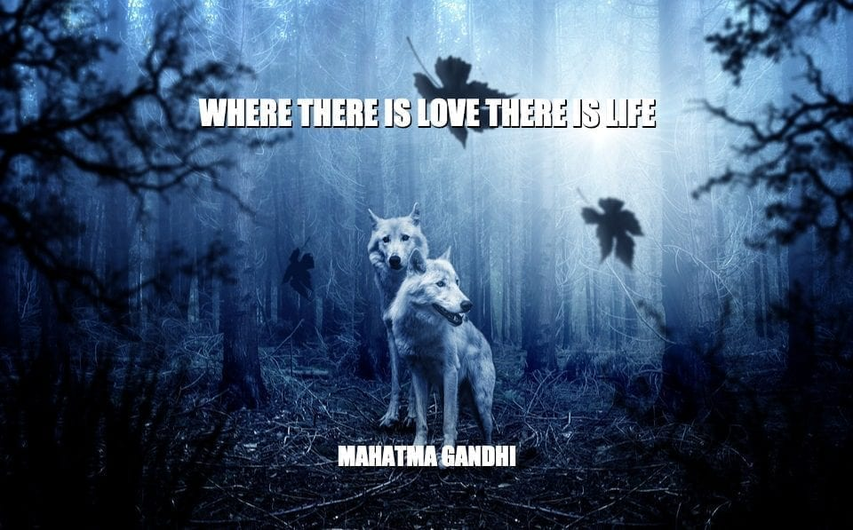Daily Quotes: Where There Is Love There Is Life petworldglobal.com