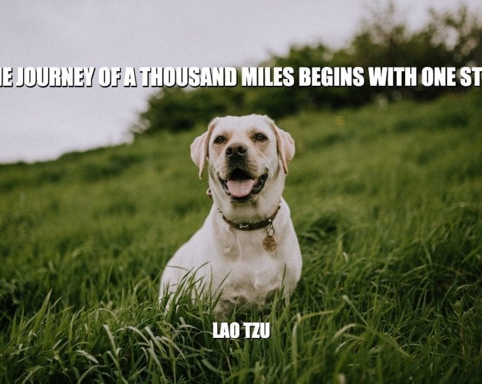 Daily Quotes: The Journey Of A Thousand Miles Begins With One Step petworldglobal.com