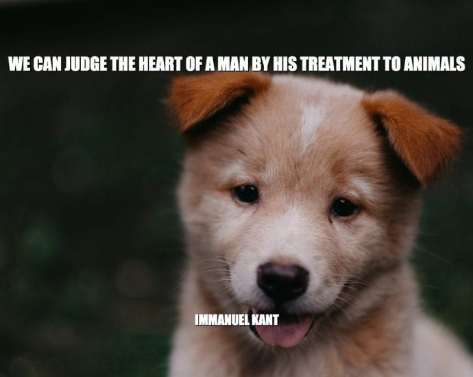 Daily Quotes: We Can Judge The Heart Of A Man By His Treatment To Animals petworldglobal.com