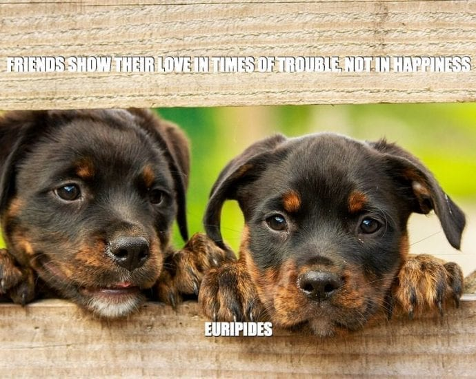 Daily Quotes: Friends Show Their Love In Times Of Trouble, Not In Happiness petworldglobal.com