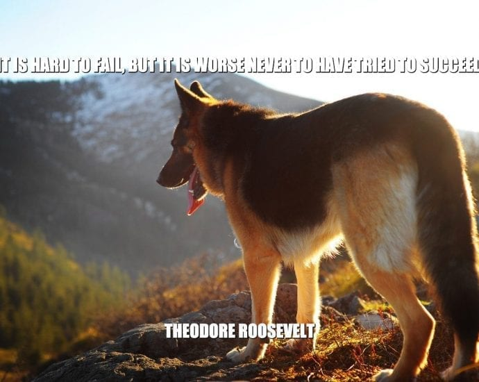Daily Quotes: It Is Hard To Fail, But It Is Worse Never To Have Tried To Succeed petworldglobal.com