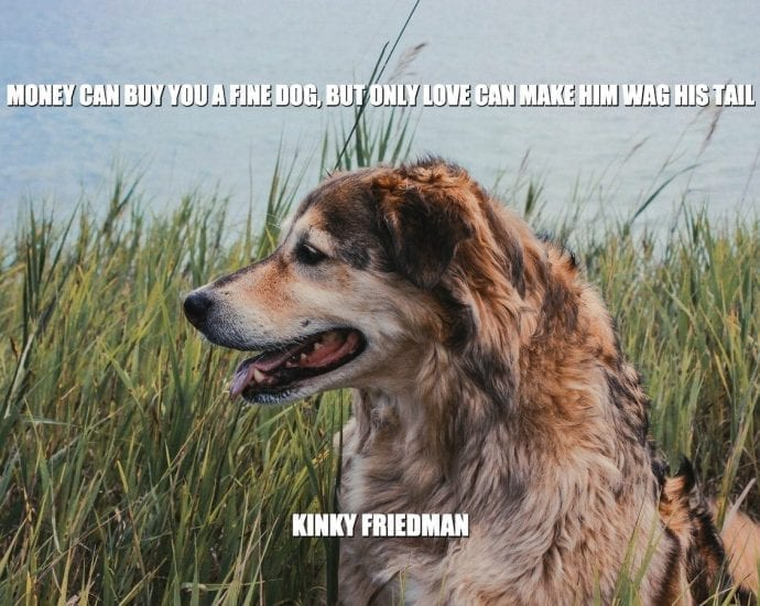 Daily Quotes: Money Can Buy You A Fine Dog, But Only Love Can Make Him Wag His Tail petworldglobal.com
