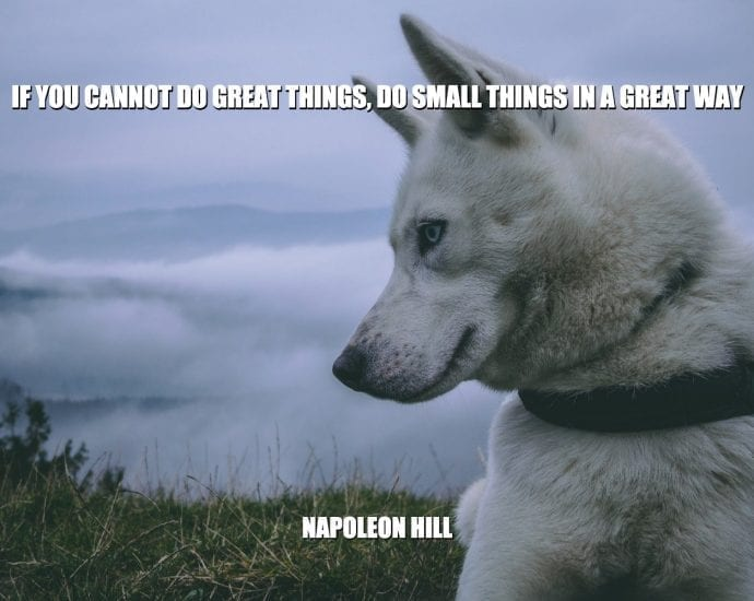 DaiIy Quotes: If You Cannot Do Great Things, Do Small Things In A Great Way petworldglobal.com