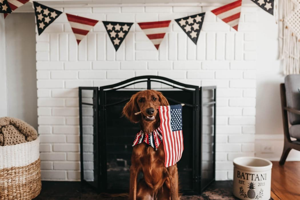 Dogs 4th of July - 4th of July Fireworks - Your Dog's Independence Day
