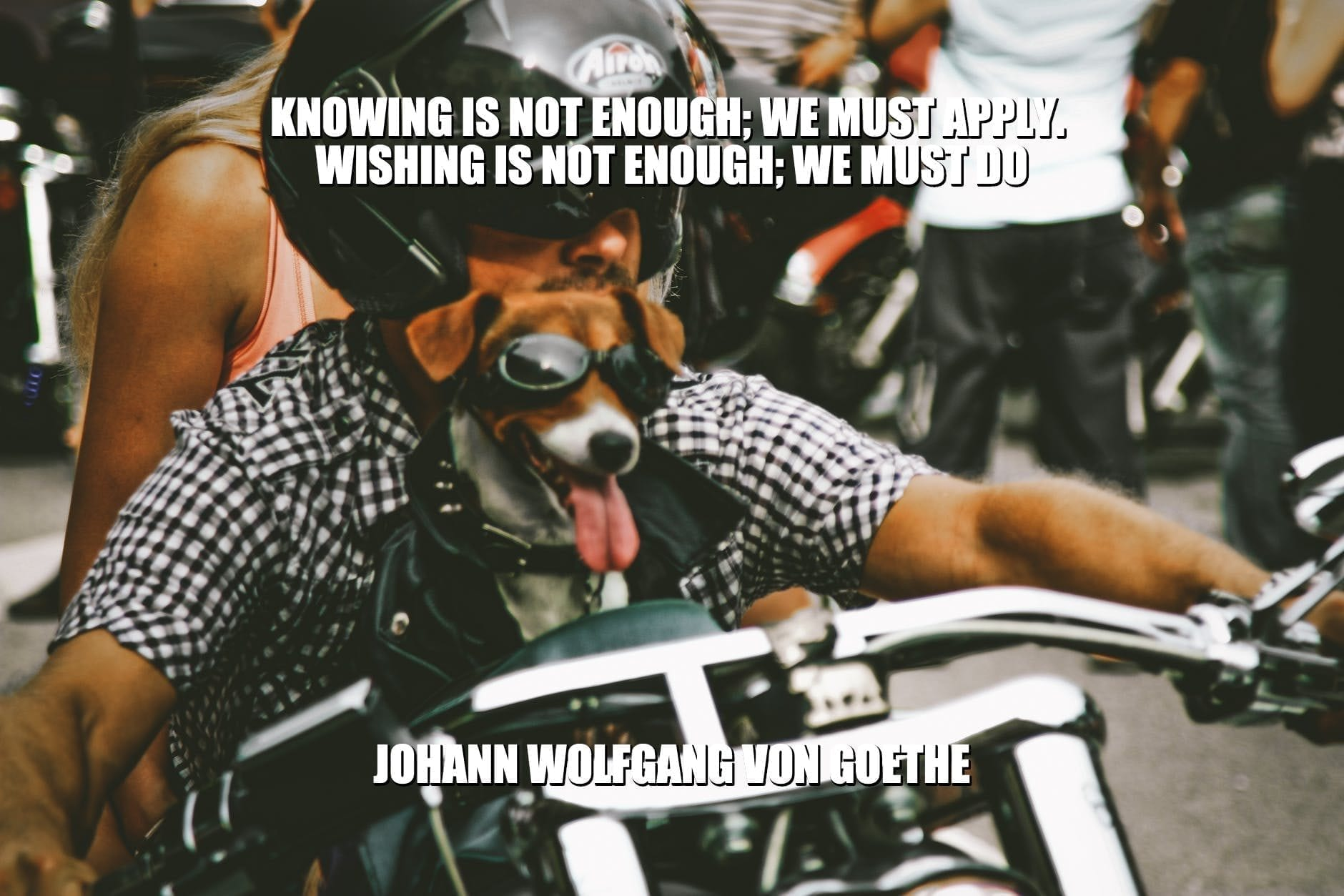 Daily Quotes: Knowing Is Not Enough; We Must Apply. Wishing Is Not Enough; We Must Do petworldglobal.com