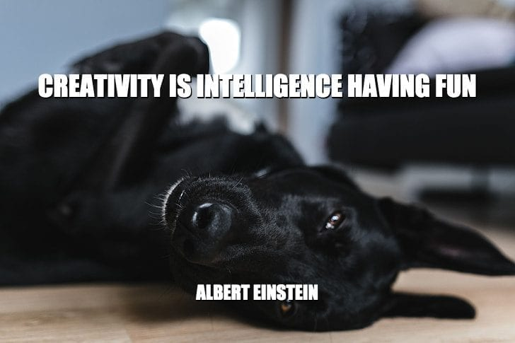 Daily Quotes: Creativity Is Intelligence Having Fun petworldglobal.com