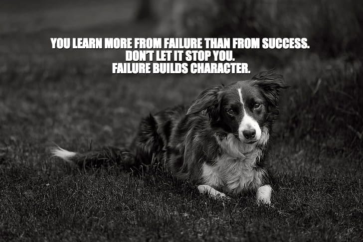 Daily Quotes: You Learn More From Failure Than From Success. Don't Let It Stop You. Failure Builds Character. petworldglobal.com