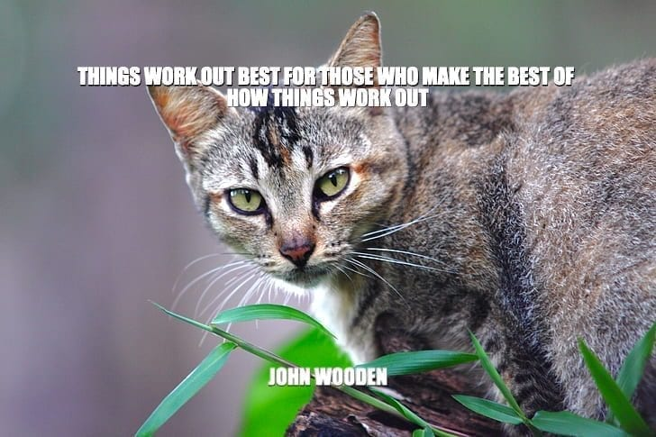 Daily Quotes: Things Work Out The Best For Those Who Make The Best Of How Things Work Out petworldglobal.com