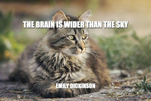 Daily Quotes: The Brain Is Wider Than The Sky 7