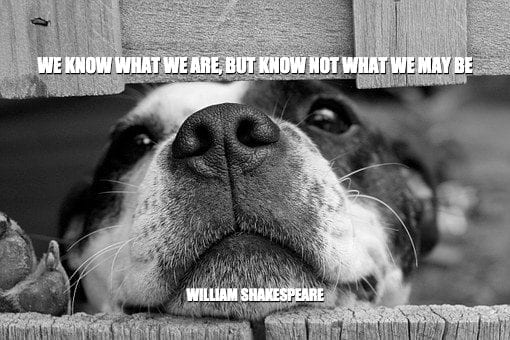 Daily Quotes: We Know What We Are, But Know Not What We May Be 3