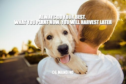 Daily Quotes: Always Do Your Best. What You Plant Now, You Will Harvest Later 3