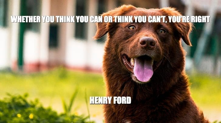 Daily Quotes: Whether You Think You Can Or Think You Can't, You're Right petworldglobal.com