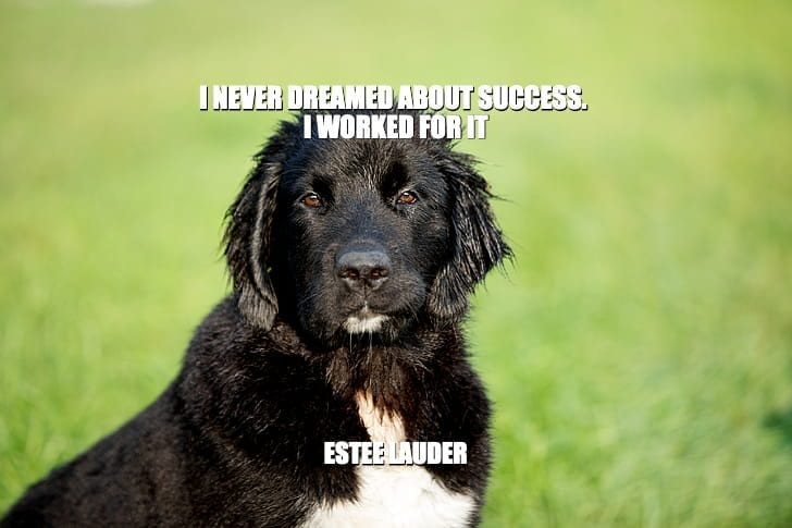 Daily Quotes: I Never Dreamed About Success. I Worked For It petworldglobal.com