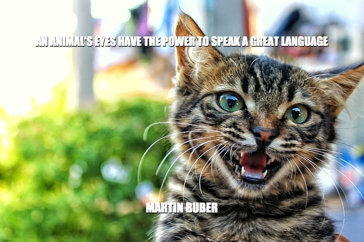 Daily Quotes: An Animal's Eyes Have The Power To Speak a Great Language petworldglobal.com