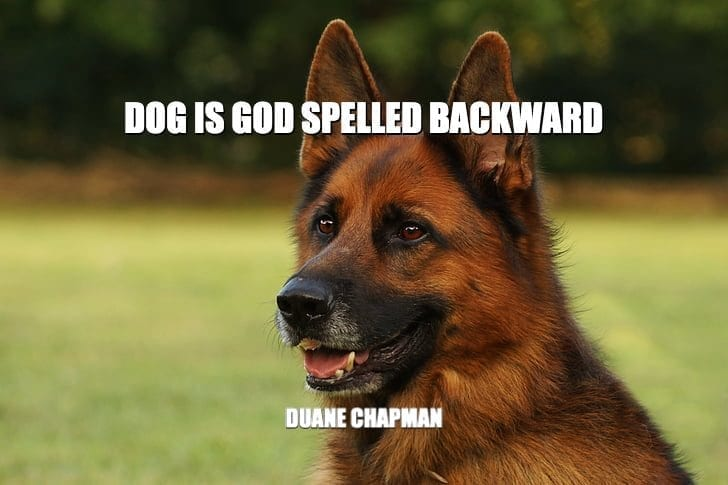 Daily Quotes: Dog Is God Spelled Backward petworldglobal.com