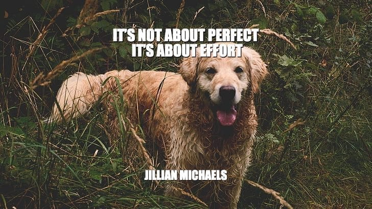 Daily Quotes: It's Not About Perfect. It's About Effort petworldglobal.com