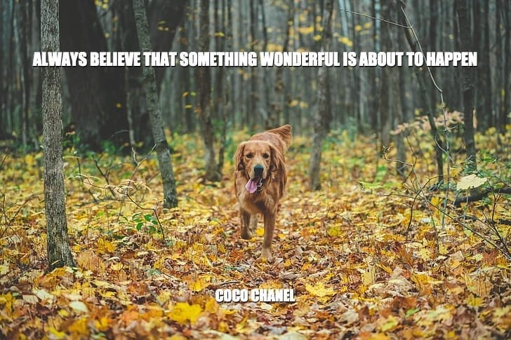 Daily Quotes: Always Believe That Something Wonderful Is About To Happen petworldglobal.com