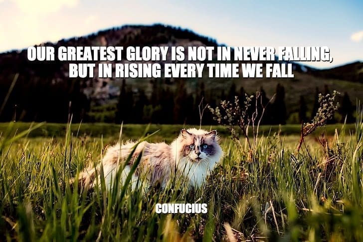 Daily Quotes: Our Greatest Glory Is Not In Never Falling, But In Rising Every Time We Fall petworldglobal.com