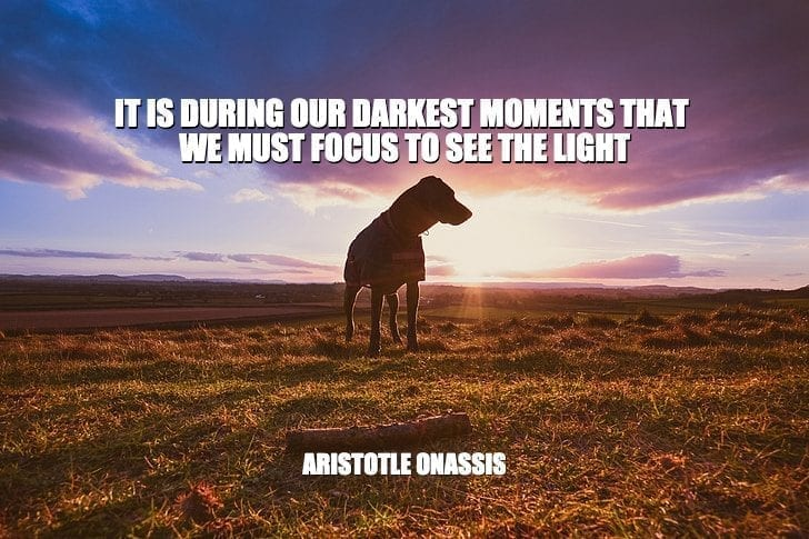 Daily Quotes: It Is During Our Darkest Moments That We Must Focus To See The Light petworldglobal.com