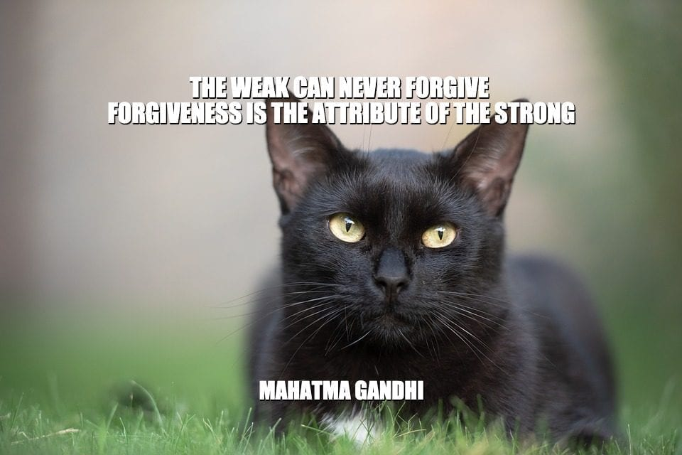 Daily Quotes: The Weak Can Never Forgive. Forgiveness Is The Attribute Of The Strong petworldglobal.com