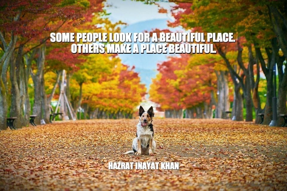 Daily Quotes: Some People Look For A Beautiful Place. Others Make A Place Beautiful petworldglobal.com