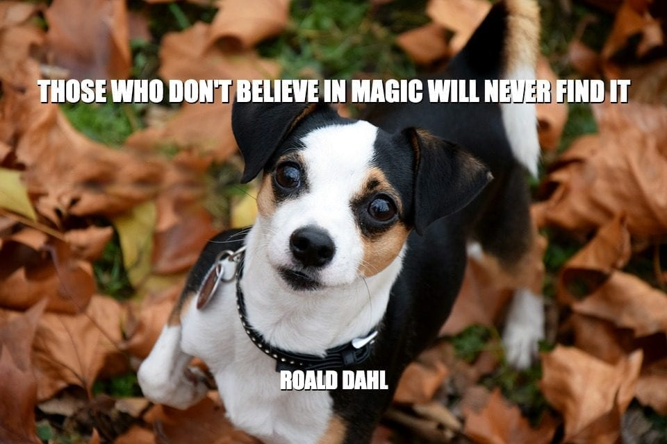 Daily Quotes: Those Who Don't Believe In Magic Will Never Find It petworldglobal.com