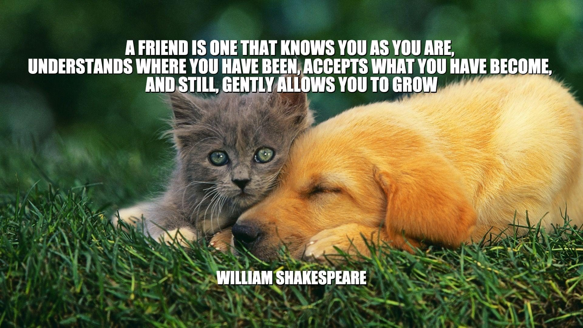 Daily Quotes: A Friend Is One That Knows You As You Are, Understands Where You Have Been, Accepts What You Have Become, And Still, Gently Allows You To Grow petworldglobal.com