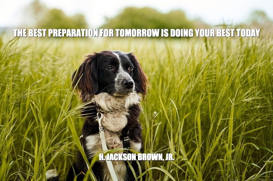 Daily Quotes: The Best Preparation For Tomorrow Is Doing Your Best Today petworldglobal.com