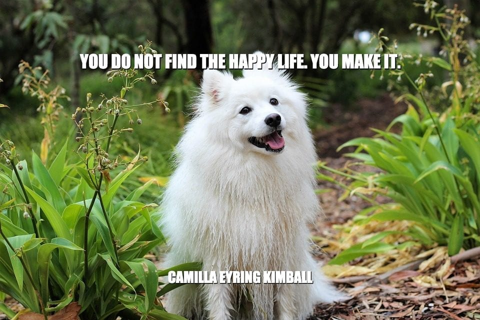 Daily Quotes: You Do Not Find The Happy Life. You Make It petworldglobal.com