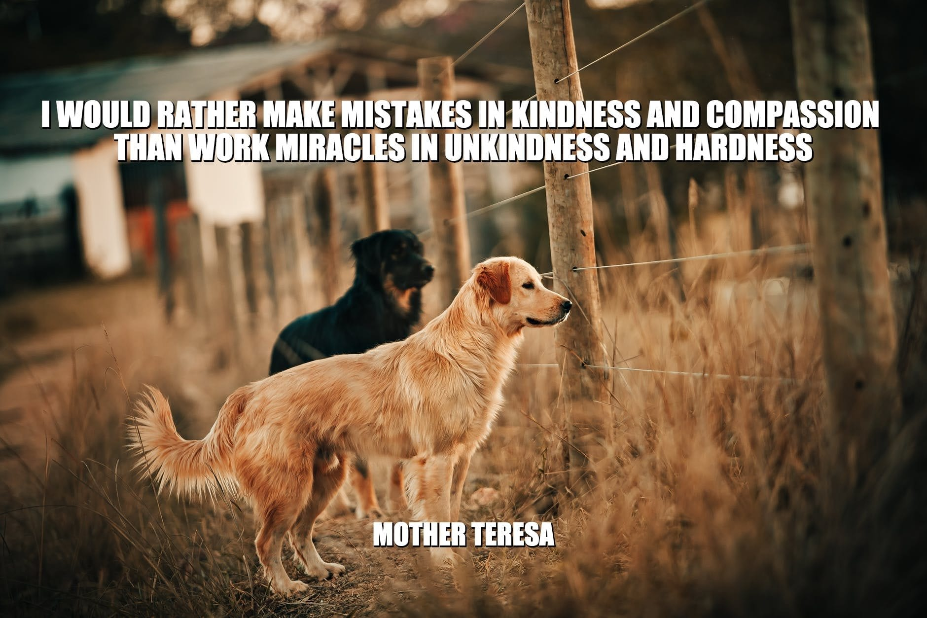 Daily Quotes: I Would Rather Make Mistakes In Kindness And Compassion Than Work Miracles In Unkindness And Hardness petworldglobal.com