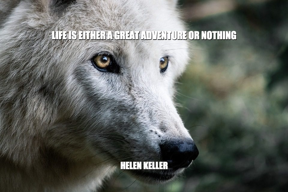 Daily Quotes: Life Is Either A Great Adventure Or Nothing petworldglobal.com