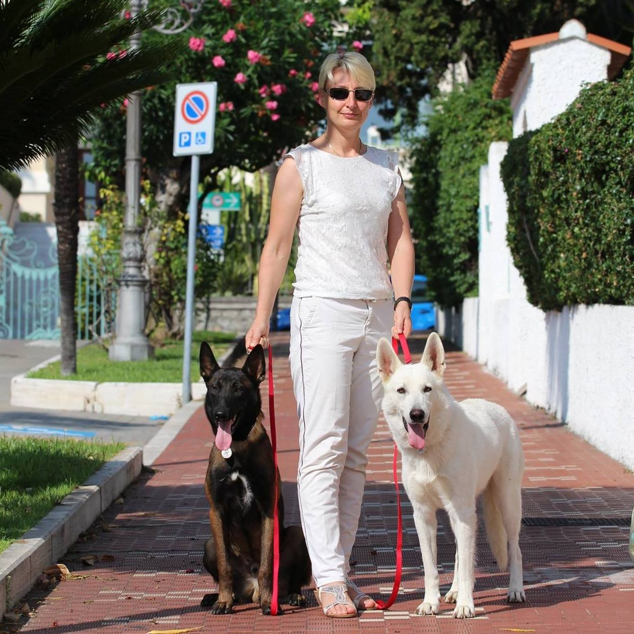Raising Happy Healthy Dogs Belgian Malinois White Shepherd
