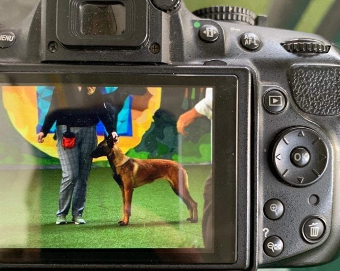 Malinois KNPV working line Best in Show